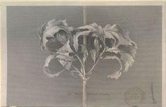 John Ruskin(British, Oak Leaves in Autumn 1860 engraving on wove paper(engraver:James Charles Armytage) Botanical Drawings, Botanical Prints, John Ruskin, Oak Leaves, Drawing Websites, Arts And Crafts Movement, Custom Art, Art Drawings, Graphite Drawings