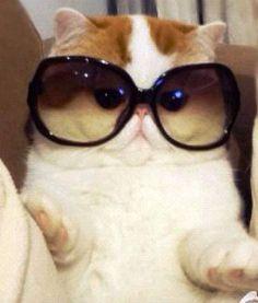 Meet Snoopy, the Newest Instagram Cat Sensation