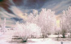 Free Microsoft Screensavers Winter Scene | WINTER SCENES FOR WINDOWS 7