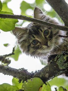 Me parece que he visto un lindo gatito.