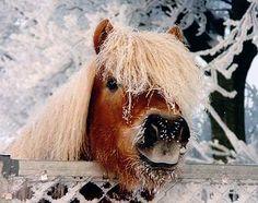 joepie het sneeuwt!