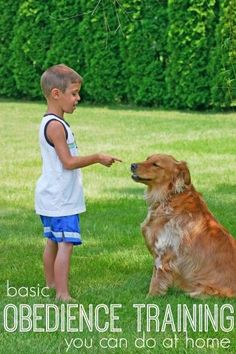 Basic Dog Obedience Training Tips and Tools via Tipsaholic.com