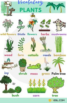 Learn Plant and Flower Vocabulary in English through Pictures and Videos. Plants are one of five big groups of living … # vocabulary words advanced learn english List Of Plant And Flower Names In English With Pictures - 7 E S L Teaching English Grammar, English Writing Skills, English Vocabulary Words, Learn English Words, Grammar And Vocabulary, English Language Learning, English Lessons, Vocabulary List, French Lessons