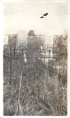"""Eight Vintage Photos """"Graveyards"""" Cemetery Headstones Overgrown Graves Lot Of Eight (8) Snapshots Found Vernacular Photos by SunshineVintagePhoto on Etsy https://www.etsy.com/listing/542643628/eight-vintage-photos-graveyards-cemetery"""