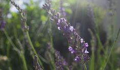 Jak a kdy sklízet zahradní bylinky Plants, Plant, Planets