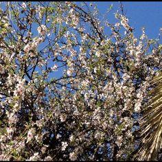 Spring in Cagliari