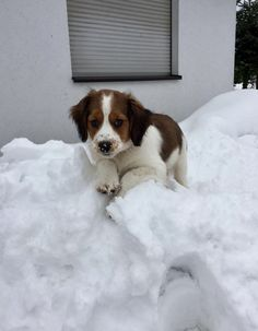 Caesar in the snow #puppy #snow