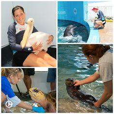If you could work at the Clearwater Marine Aquarium, what job would you pursue?
