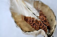 Milkweed plant produces 4 different edible products, and all are delicious. It was a regular food item for Native American tribes within its broad range.
