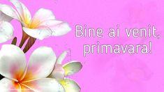 Felicitari de Primavara - O primavara fericita pentru toti prietenii mei! - mesajeurarifelicitari.com