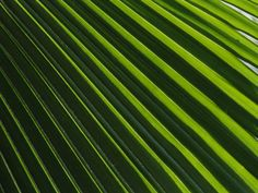 Possible Art Selection - Close View of a Palm Plant
