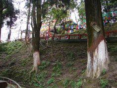 #magiaswiat #podróż #zwiedzanie # dardżyling #blog #azja #katedra #indie #pałac #ogrody #zabytki #swiatynia #stupa #kolejka #pociag #mahakala #tigerhill #wschod #słońce #yigachoeling #monastery #miasto #drukthuptensangag # cholingmonastery #himalaje Indie, Plants, Blog, Blogging, Plant, Planets