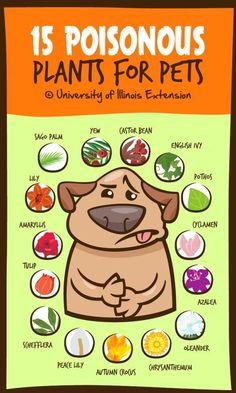 DOG TRAINING TIPS 1 #MasterDogTrainingandSocializing