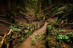 Puzzlewood, Dean forest, England