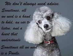 Poodle Quote