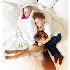 Famous Nappers Theo And Beau Welcome New Baby Sister To Their Cuddle Fests Dogs And Kids, Animals For Kids, Animals And Pets, Baby Animals, Cute Animals, Dog Love, Puppy Love, Gato Animal, Welcome New Baby