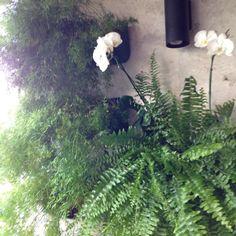 """""""#glauweil_paisagismo #workinghard #orquideas #paisagismo #paisagismovertical"""""""