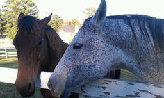 Horses! :)