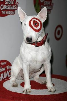 """""""Bullseye"""" English bull terrier is one of the bully breeds at risk. Www.rackcitymt.com supports #no2bsl"""