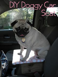 DIY Doggy Car Seat. So cute!