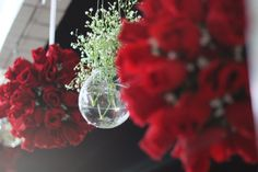 Vermelho a cor da paixão .Bolas de rosas vermelhas e vaso de vidro com gipsofila