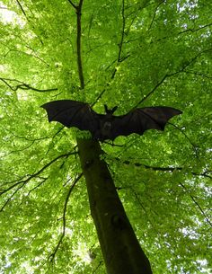 Picture of a flying bat.