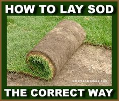 best way and time to lay and prepare sod