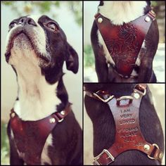 Leather Dog Harness - Custom Leather Hand Tooled Dog Harness - Balanced for Most Comfort - Personalized with Pets Name - Phone Number