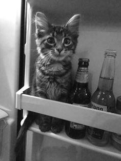 Beer anyone?