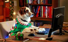 dog with a blog cast | christmas-sweaters-dog-with-a-blog.jpg