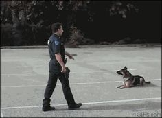 """seashellsandpastels: """" oscarmikeactual: """" bywayofpain: """" unrepentantwarriorpriest: """" War Puppies! """" THAT DOG JUMPED A FUCKING CAR I NEED HIM!!! """" I'm never going to stop reblogging this """" reasons why..."""