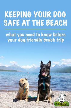 These are the tips you need to know before you go to the beach with your dog.