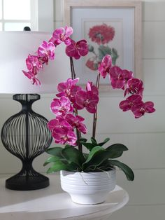 Pop some #fuchsia in your space with our lifelike #orchid.