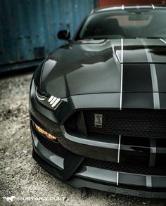Shelby Mustang mmm yea please Ford Mustang Shelby Gt500, Neuer Ford Mustang, Ford Mustang Eleanor, 2015 Mustang, Mustang Cobra, Ford Shelby, Ford Gt40, Luxury Sports Cars, Best Luxury Cars