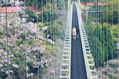 Beppu Walking Tours