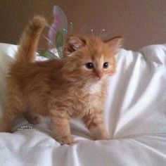Cute Baby Cats, Cute Little Animals, Cute Cats And Kittens, Cute Funny Animals, Kittens Cutest, Cute Dogs, Cute Babies, Pics Of Kittens, Baby Dogs