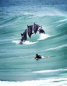 by Lina Karra  Surfing with Dolphins.... I would love to do this                                                                                                                                                      More