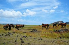 Horses in the middle of Rapa Nui fields. Manado, Tv, Fields, Middle, Horses, Mountains, Nature, Travel, Animals