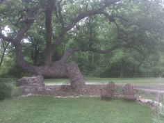 Historic bent tree; Humboldt, Ks