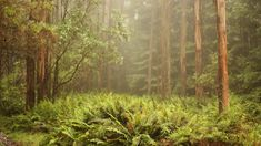 Fern forest. | 26 Desktop Backgrounds That Will Make You Not Hate Working