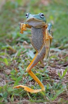 The frog that thinks it's the Karate Kid – Görges, Carola The frog that thinks it's the Karate Kid Kung fu froggy! Everybody likes Kung fu fighting Cute Funny Animals, Funny Animal Pictures, Cute Baby Animals, Animal Pics, Funny Photos, Funny Frogs, Cute Frogs, Kung Fu, Nature Animals