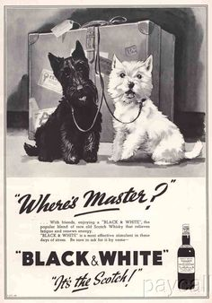 1939 Ad - Black & White Scotch Whisky - 'Where's Master? It's the Scotch!'