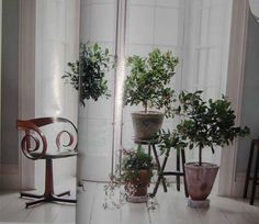 Indoor Plants: For our Money, Begonias