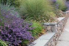 Mounded planting | Thuilot Assoc