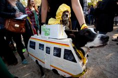 Best Costumes from 2014 Halloween Dog Parade -- NYMag