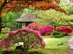 The Japanese garden of Clingendael.  down the street from our house, open a month once a year.  LOVED
