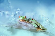 Photographer Wil Mijer loves capturing the smaller living bits of nature, such as spiders, flies, butterflies and frogs and she does so with elegance and artistic devotion. The frog is quite a rare object in macro photography, so the fact that she loves shooting them makes her photos even more fascinating.