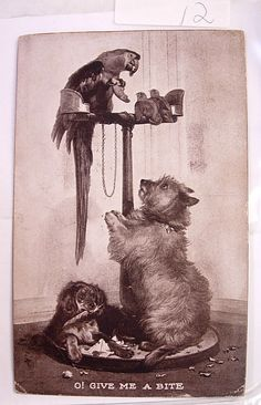 Vintage Animal Postcard Two Dogs a Parrot and by NeatstuffAntiques, $40.00