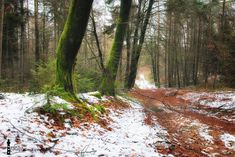 Forest hike through snow by fotografie-egmond #ErnstStrasser #Niederlande #Netherlands Netherlands, Hiking, Country Roads, Snow, The Nederlands, Walks, The Netherlands, Holland, Trekking