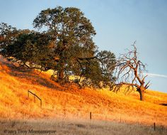 Daybreak, Oak Trees, Contra Costa County, CA | Flickr - Photo Sharing!